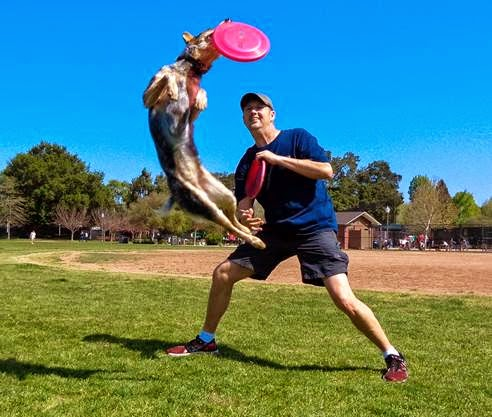 Getting dog discs for your sport dog