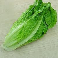 khasiat daun selada