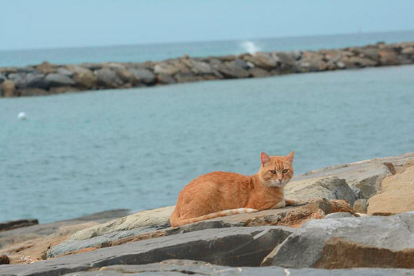 Topic des chats - Page 17 Beach_cat