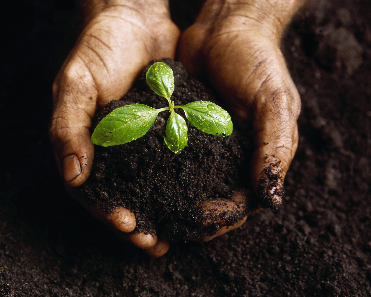 http://4.bp.blogspot.com/-we38fuWQ_DQ/Thfrxl-vBxI/AAAAAAAAAQU/OamRoHQLl0E/s1600/plant-nurtured-by-hands.jpg