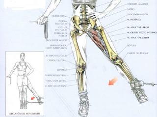 Ejercicio para aductores con polea baja. Cuerpo en forma. Como mantener nuestro cuerpo en forma