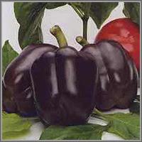 Сладкий перец сорт «Фиолет»