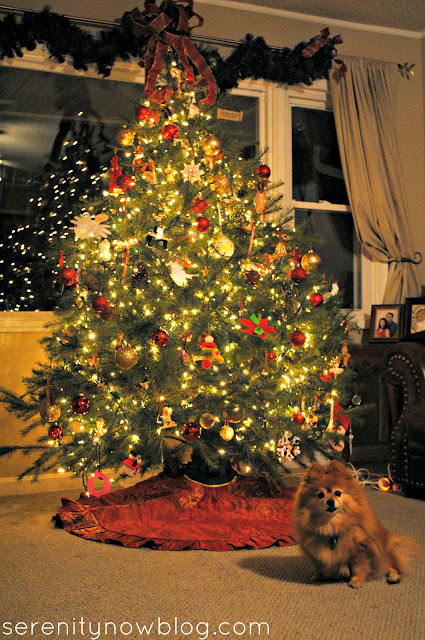 Christmas Tree Photo with Our Dog, Serenity Now blog