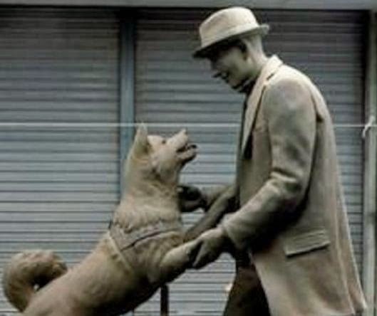 hachiko the most faithful dog in 9 years of waiting
