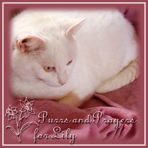 Purrs for Lily and Her Family