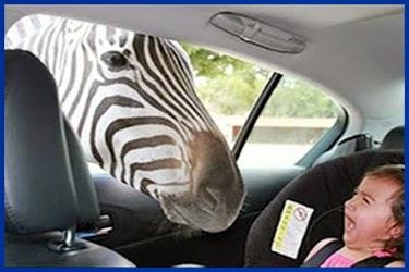 lustige bilder von giraffen - Bevor sich Giraffen paaren, pinkelt das SprücheIO