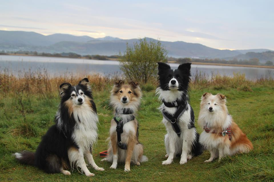 More about us and our dogs - click below