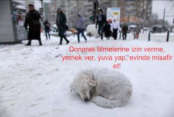 Soğuktan donmalarına izin verme!