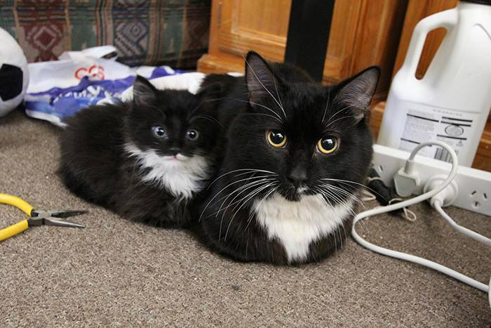 Cats With Their Cute kittens