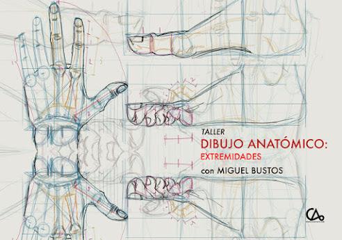 DIBUJO ANATÓMICO // 4 de sept