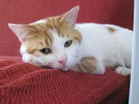 Tigro nato il 7/1/2010