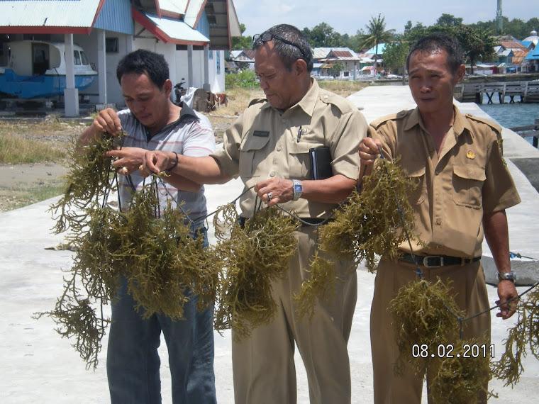 Pengembangan Rumput Laut