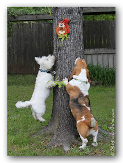 Westie and Basset jumping up on tree to catch toy squirrel