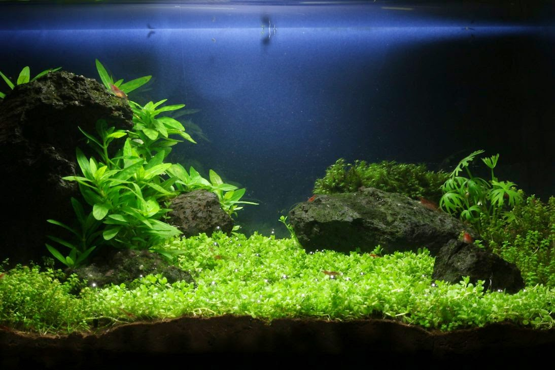 Jdb plantando un acuario paso a nano