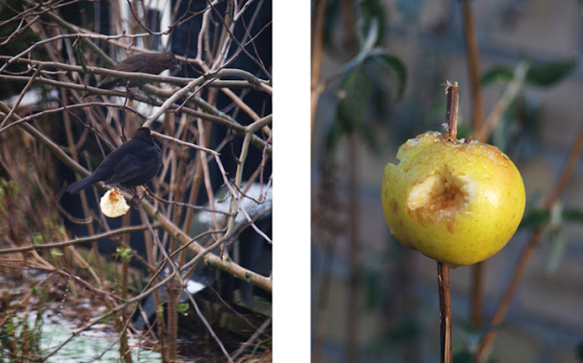 Æbler i haven