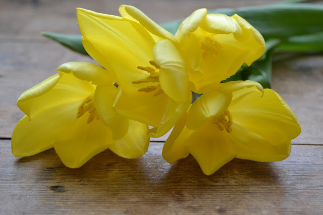 tulips_yellow