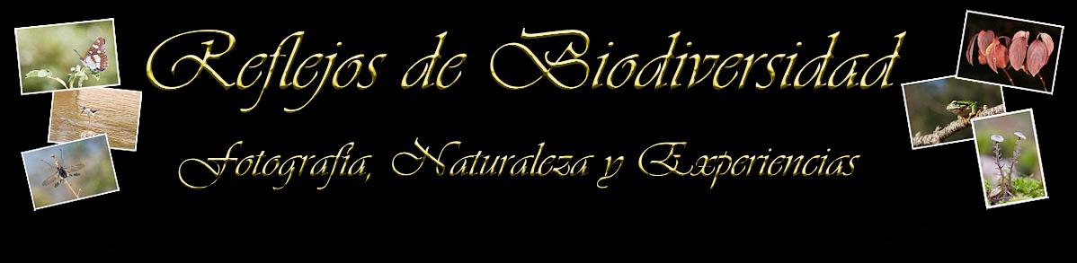 REFLEJOS DE BIODIVERSIDAD