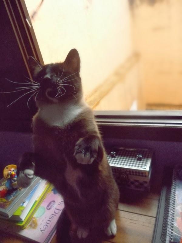 gato de pé