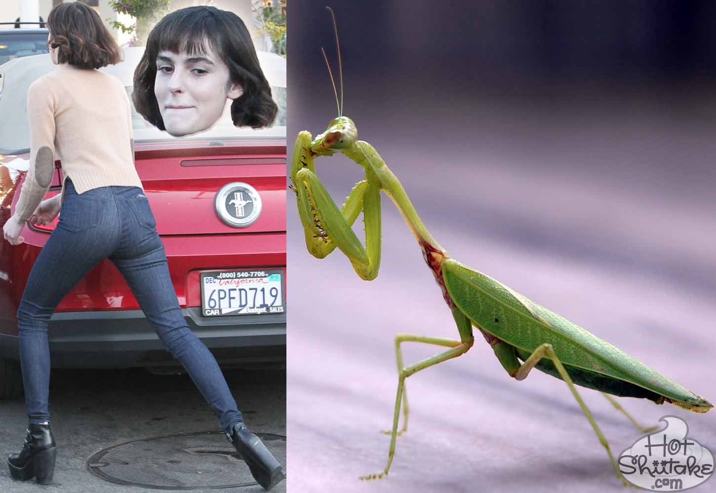 Ali Lohan Preying Mantis