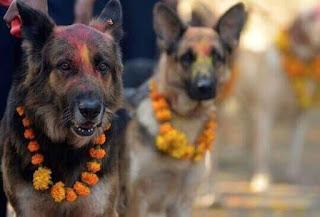 hindus celebram a amizade com o cão em sinal de respeito e devoção por eles serem os guardiões da alma após a morte