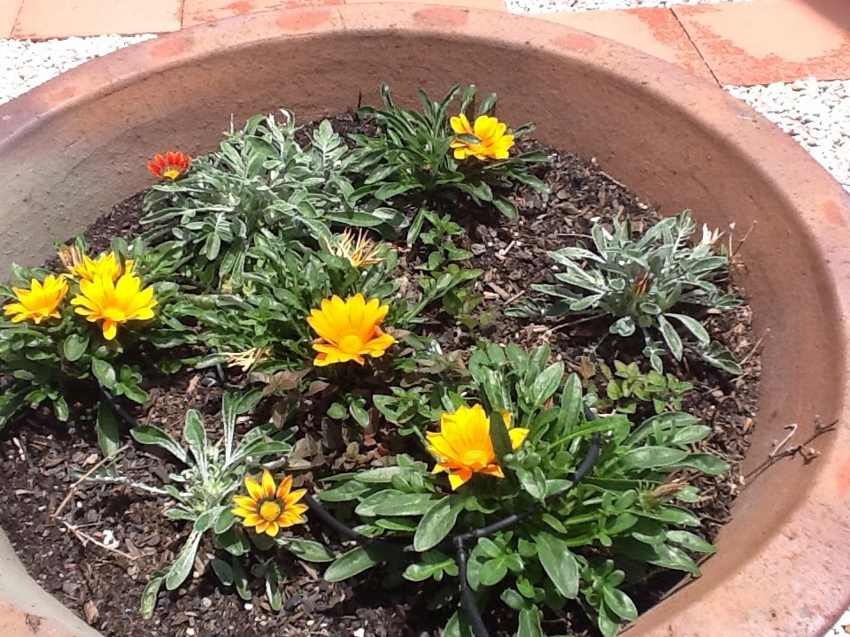 Basic gardening tips plus Australian native plants