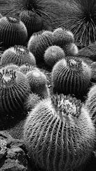 Bowling Cacti