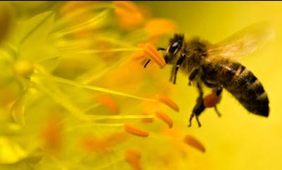 http://lafamiliapicola.blogspot.com/2015/07/conoces-el-rol-de-las-abejas-en-la.html