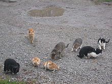 a clowder of feral cats