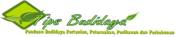 Tips Budidaya