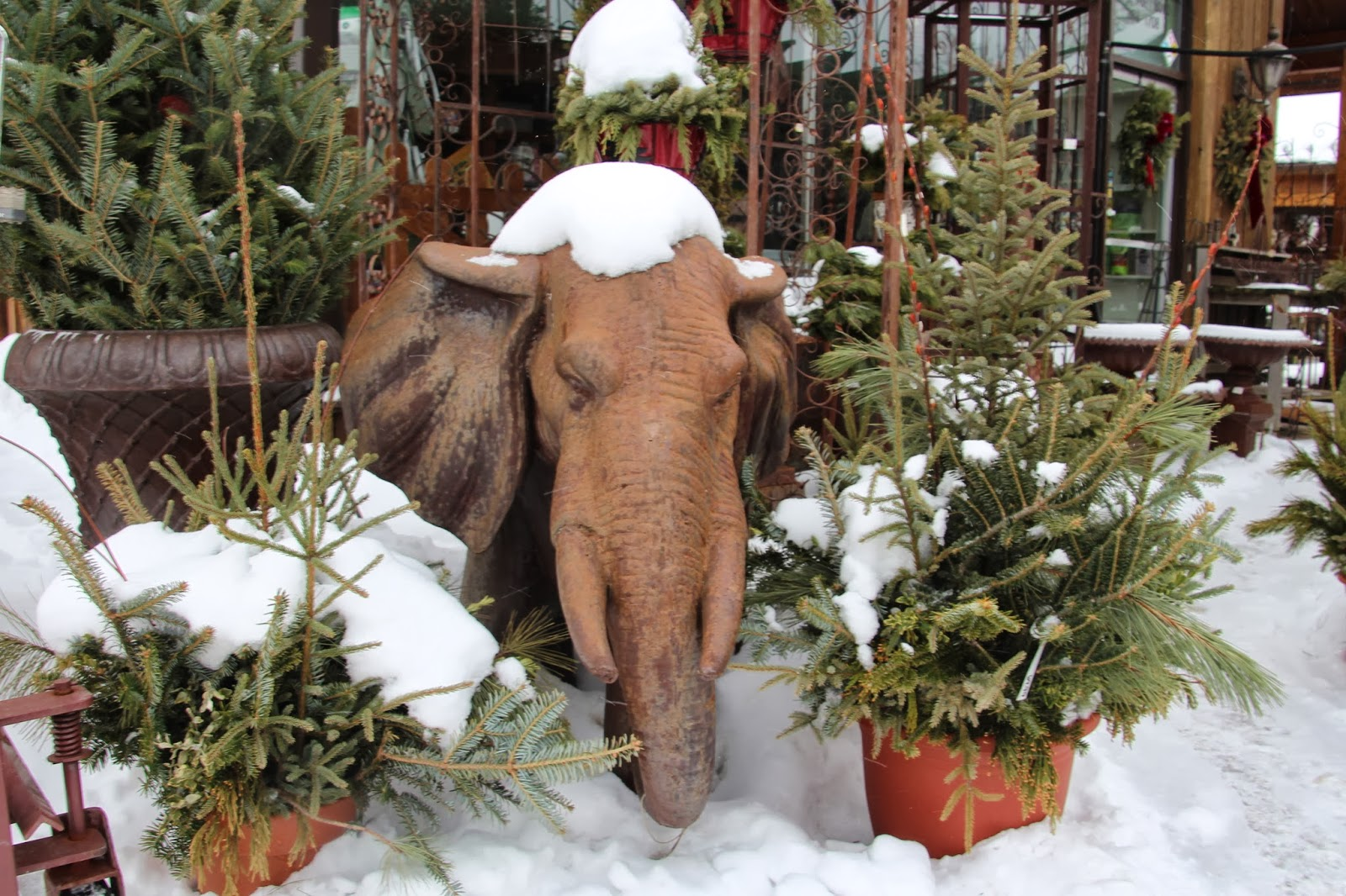 VISUAL SAINT PAUL: Cold Animal-Camera Critters