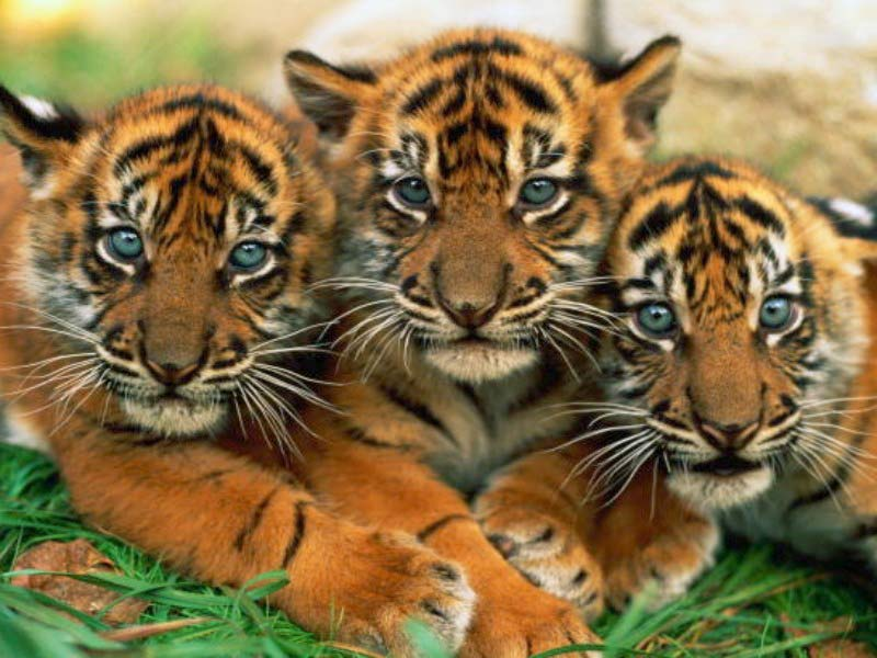 Discover india endangered species in india