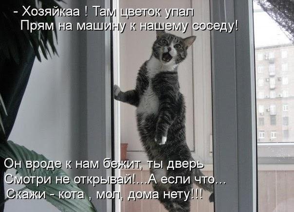 Коты случаются 04