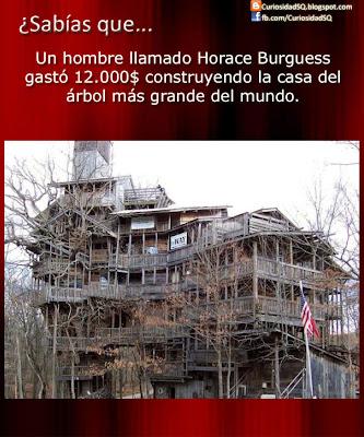 Sab as que la casa del rbol m s grande del mundo for La casa mas grande del mundo
