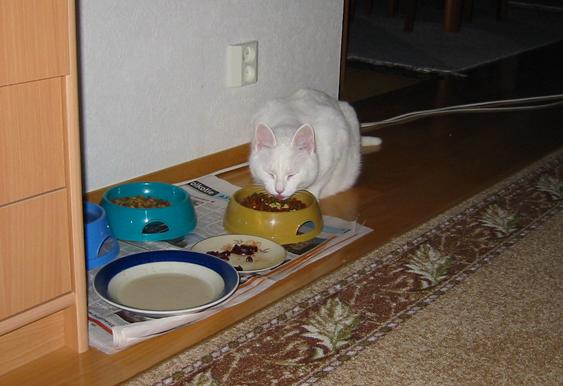Kissan teollisen ruuan markkinoinnista