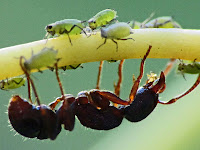 Ant Fact And Photography