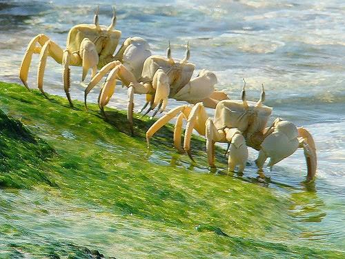 socotra+island+pulau+dajjal billyinfo13 Keanehan Pulau Socotra di Yemen, pulau Dimana DAJJAL Dirantai?