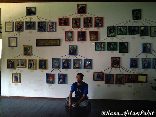 orang utan, kalimantan, indonesia