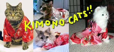 kimono cat 01