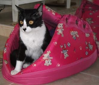 Gatos que estão sob minha guarda... Esta é a Rubi