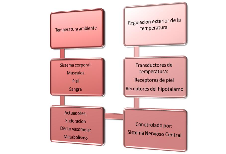 Regulacion de la temperatura corporal: El cuerpo humano como sistema ...