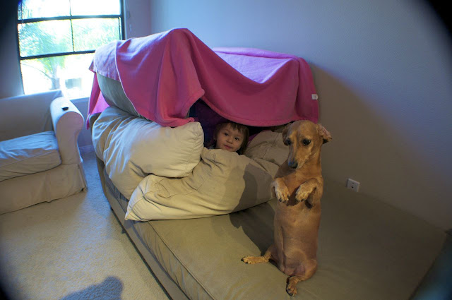 A dog sits like human guarding pillow fort with little girl  inside the fort, cute dog pictures, cute dogs