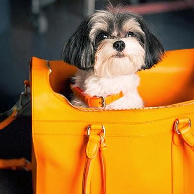 accesorios para perros Ralph Lauren