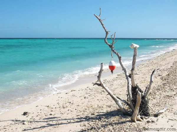 Dead tree by turquoise water has a boat's float and line it at Dry Tortugas National Park, Florida