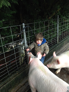 A boy waters his 4-H pigs