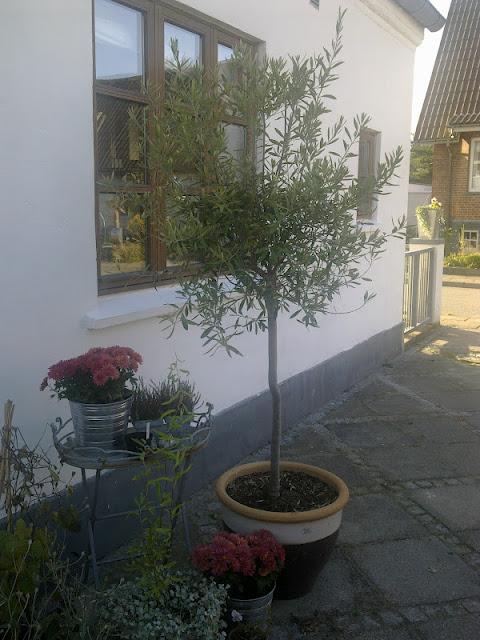 Birgitte på nettet: september 2012