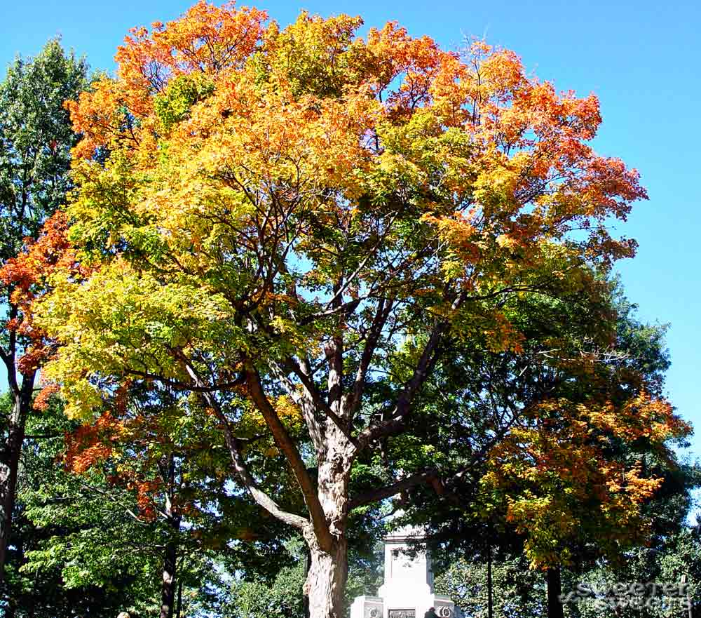 Fall Foliage in New England by Tricia @ SweeterThanSweets