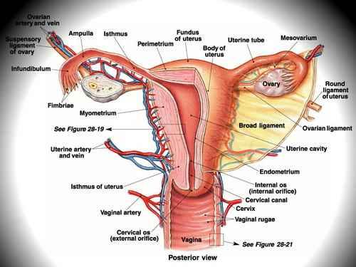 Kanker | Ca | Tumor | Seviks | Rahim