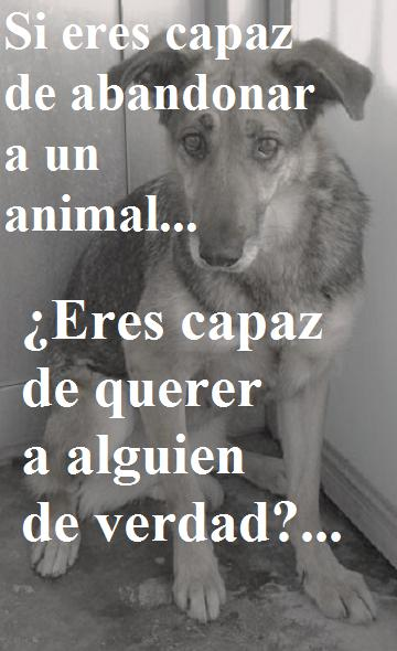 no mas maltrato animal