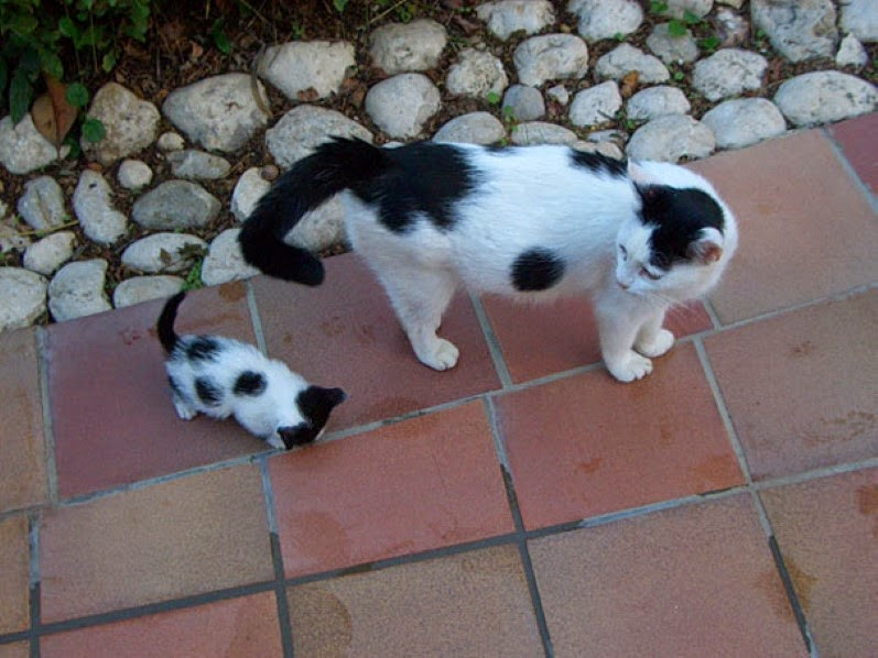 12. A spotted cat and her almost-identical smaller counterpart. - 30 Animals With Their Adorable Mini-Me Counterparts