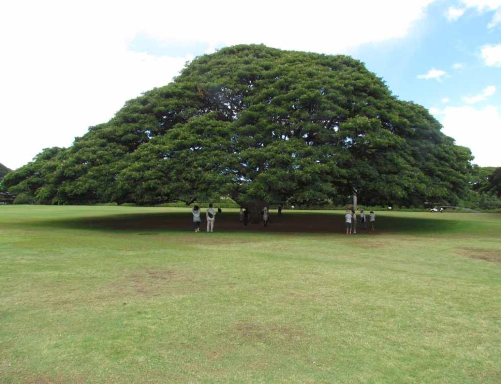 autobiography of banyantree Title: free autobiography of a banyan tree essay (pdf, epub, mobi) author: a s barnes subject: autobiography of a banyan tree essay keywords.